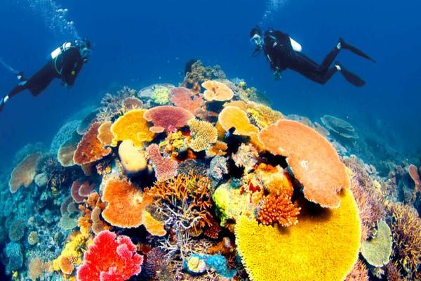 Bảo vệ san hô đang nhận được quan tâm lớn từ thế giới vì thế loại trừ những sản phẩm có chứa parabens