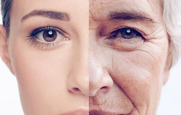 Tác động của các yếu tố nội, ngoại sinh gây nên sự lão hóa