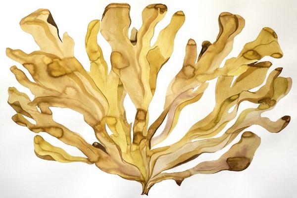 Tảo nâu là thành phần giúp hạn chế việc hình thành mụn trứng cá