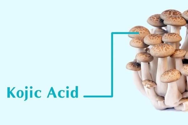 Thành phần làm sáng da có nguồn gốc từ nấm - kem trị thâm mụn tốt