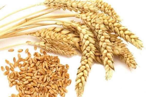 Với nguồn gốc từ lúa mạch acid azelaic acid chắc hẳn sẽ đem đến hiệu quả bất ngờ giúp dưỡng trắng da cho bạn - serum dưỡng trắng da trị nám