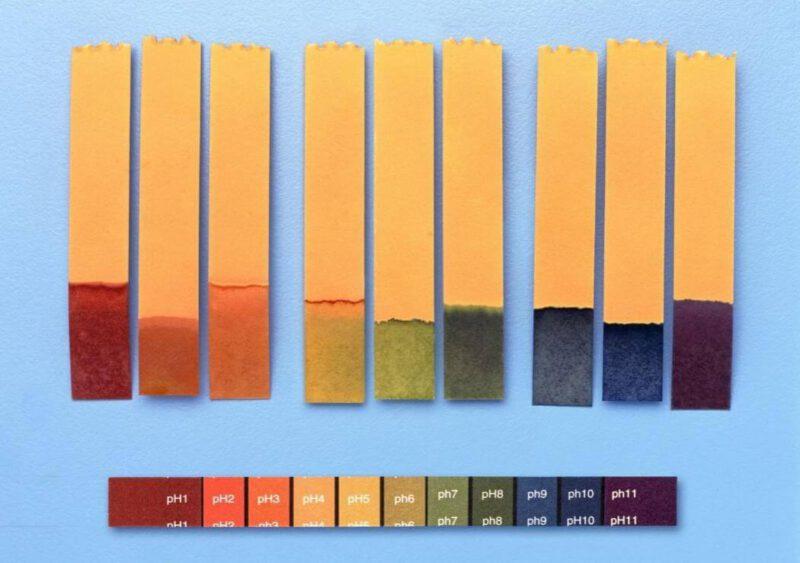 pH 5.5 khi đo bằng giấy quỳ thường cho màu vàng hơi ngả sang lục