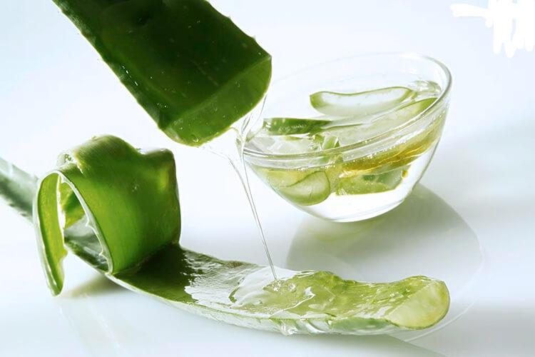 Nha đam chứa nhiều chất dinh dưỡng, khoáng chất thiết yếu
