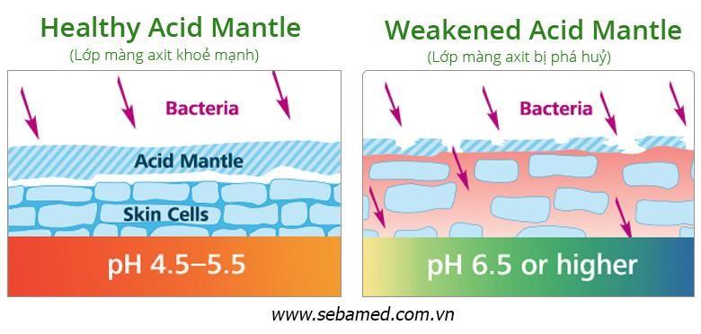 Lớp màng trên biểu bì da bị phá hủy dẫn đến da bị khô, vi khuẩn dễ xâm nhập gây mụn - sữa rửa mặt làm khô da