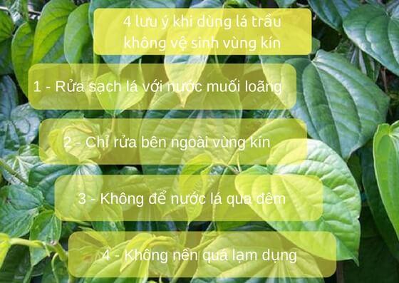 Những lưu ý khi sử dụng lá trầu không khi vệ sinh vùng kín